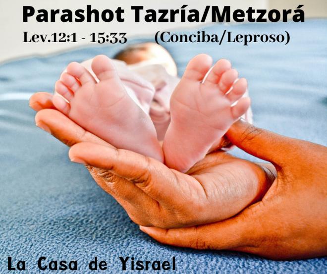 Parashot Tazría_Metzorá